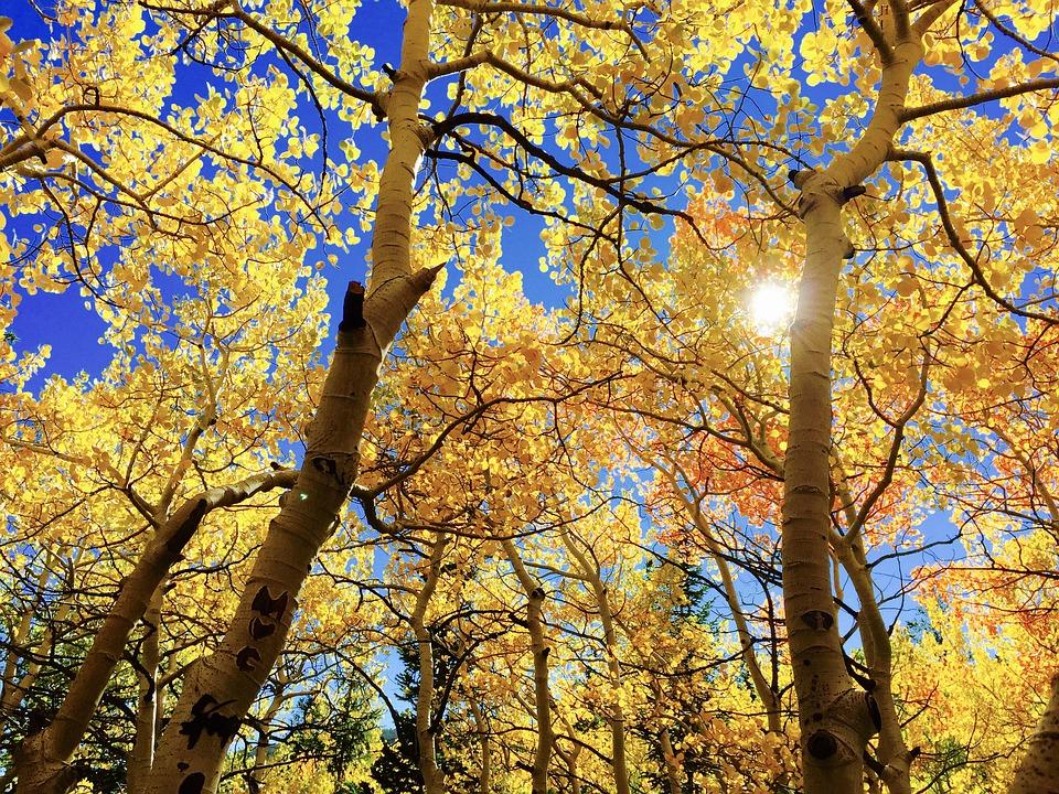Pourquoi t'attacher à un arbre, alors que tu as toute une forêt à ta disposition ?